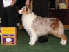 Dallas at Westminster 2007