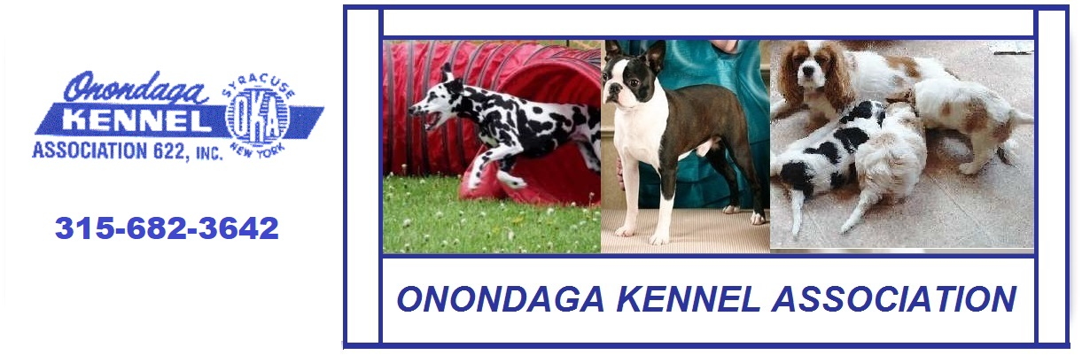 Dog Friendly Stores Onondaga County area